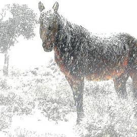 Jeanne  Bencich-Nations - Brown Sugar In A Blizzard