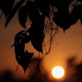 Miel  Paculanang - Brown Sunset