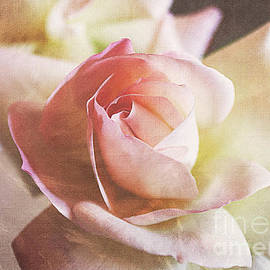 Janice Rae Pariza - Brushed Pink Rose