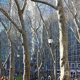 Photographic Art and Design by Dora Sofia Caputo - Bryant Park in Winter