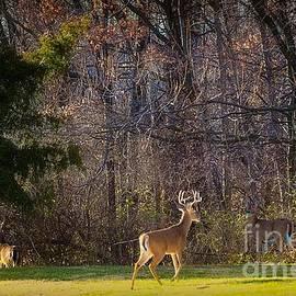 Peggy  Franz - Bucks and Babes Deer