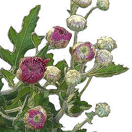 Wide Awake Arts - Buds Of Chrysanthemum