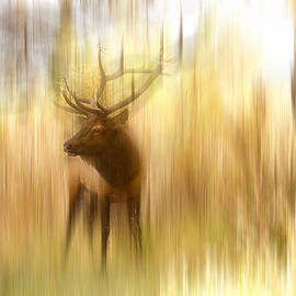 James BO  Insogna - Bull Elk Forest Gazing