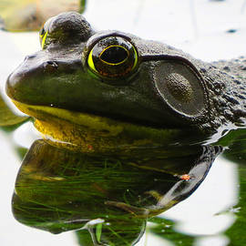 Dianne Cowen - Bullfrog in August