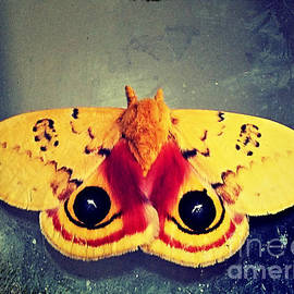 Christy Ricafrente - Bullseye Moth