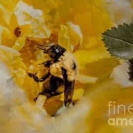 Janice Rae Pariza - Bumble Bee