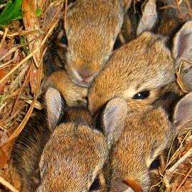 Patti Whitten - Bunny Babies