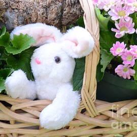 Kathleen Struckle - Bunny In A Basket
