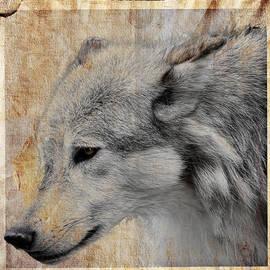 Steve McKinzie - Burlap Grey Wolf