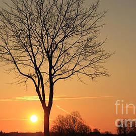 Four Hands Art - Burning tree in the sunrise