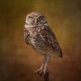 Kim Hojnacki - Burrowing Owl Portrait
