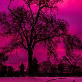 Kathy Liebrum Bailey - Burst Of Pink Sunset