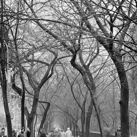 Dave Beckerman - Bus Stop Fifth Avenue