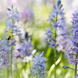 Annette Hugen - Busy Bee