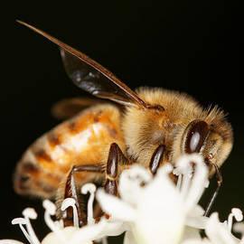 Jonathan Davison - Busy Bee