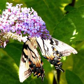 Gardening Perfection - Busy Butterfly