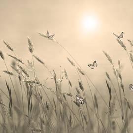 Nina Bradica - Butterflies