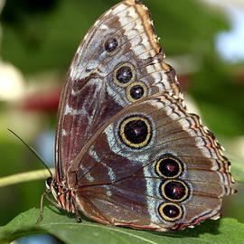 Bob Slitzan - Butterfly 4