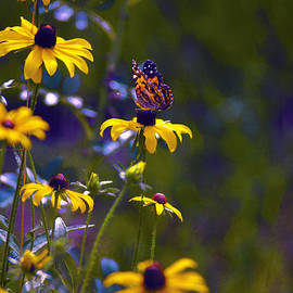 ARTography by Pamela  Smale Williams - Butterfly and Black Eyed Susans