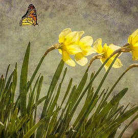 Cathy Kovarik - Butterfly and Daffodils