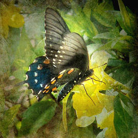 Bill Voizin - Butterfly and Jasmine