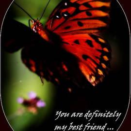 Travis Truelove - Butterfly - Best Friend