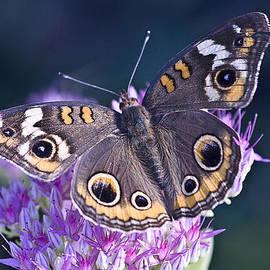Lowell Monke - Butterfly eyes