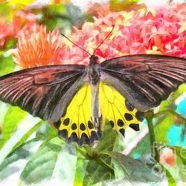 Sergey Lukashin - Butterfly from Malaysia