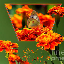 Thomas Woolworth - Butterfly In A Sea Of Orange Floral 02