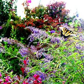 Gardening Perfection - Butterfly in Flight