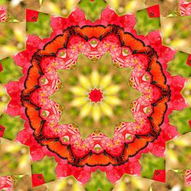 Rosalie Scanlon - Butterfly Kaleidoscope
