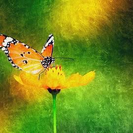 Karyn Robinson - Butterfly Kisses