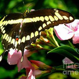 Kristine Merc - Butterfly