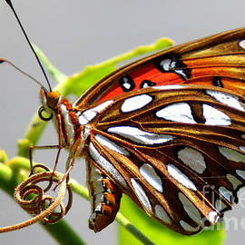 Laura Louise - Butterfly Laying Eggs