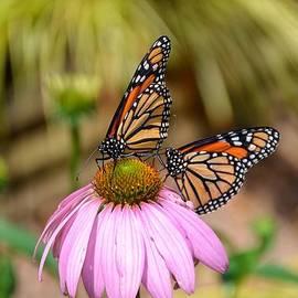 Nikki McInnes - Butterfly Love