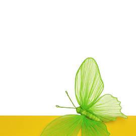 Maria Bobrova - Butterfly