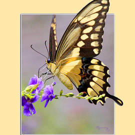 Mariarosa Rockefeller - Butterfly