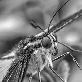 Mickeys Photography - Butterfly