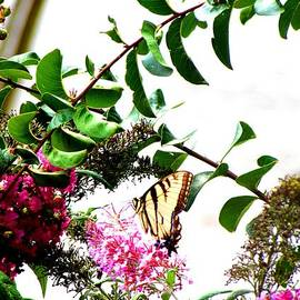 Gardening Perfection - Butterfly Nectar