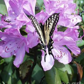 Andrew Govan Dantzler - Butterfly on Rhododendron