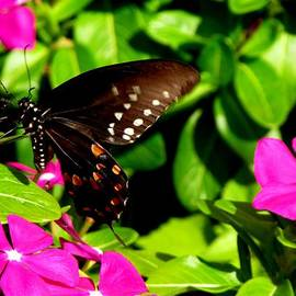 Gardening Perfection - Butterfly Pose