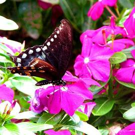 Gardening Perfection - Butterfly Quickstop