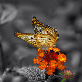 Thomas Woolworth - Butterfly Wings Of Sun Light Selective Coloring Black and White Digital Art