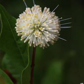 Ella Kaye Dickey - Button Flower