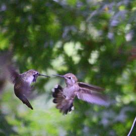 Kym Backland - Buzz Off  Going beak to beak