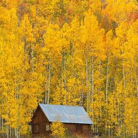 Steve Luther - Cabin in the Gold