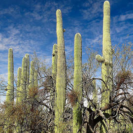 Ed  Cheremet - Cacti Coven