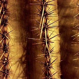 M Landis - Cactus 9