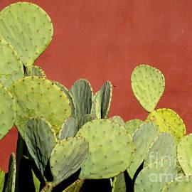Eva Kato - Cactus against Orange Wall