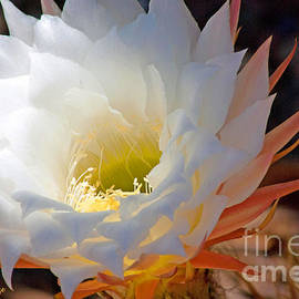 ILONA ANITA TIGGES - GOETZE  ART and Photography  - Cactus Blossom